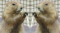 Bilder verpixeln: So gehts kostenlos am PC & Smartphone