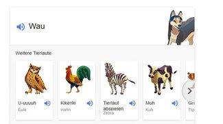 Tiergeräusche online hören: So geht's mit Google und Co.