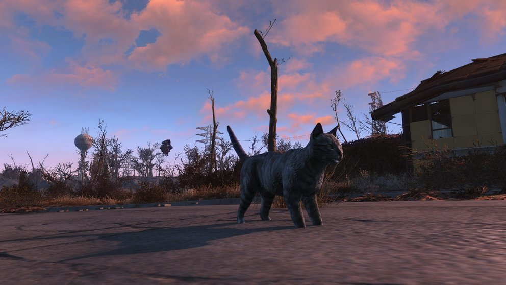 dogmeat cat