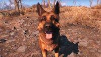 Fallout 4: Dogmeat gewinnt Award als bester Videospielhund