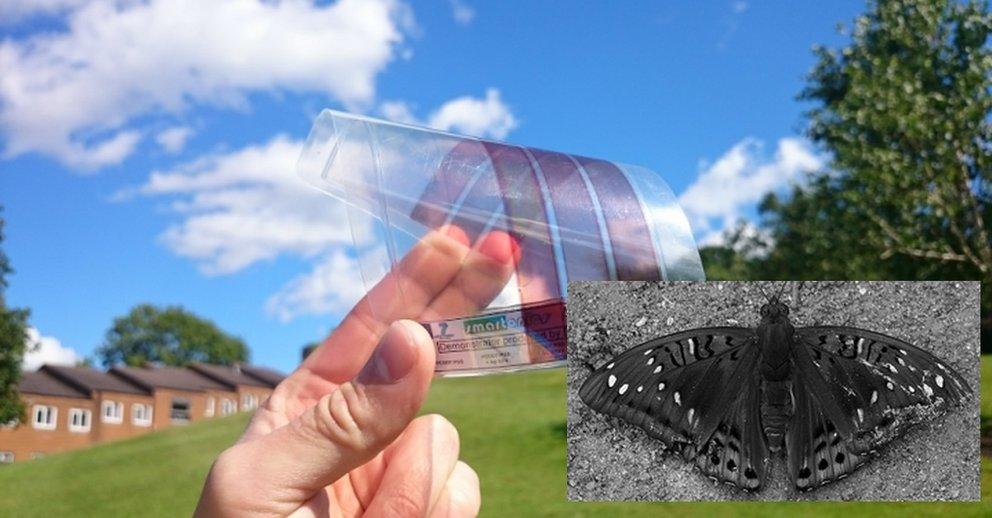 """""""Moth Eye""""-Graphen: Durchbruch könnte Solarenergie revolutionieren"""