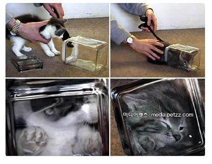 Bonsai Katze