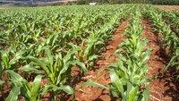 Glyphosat-Verbot sinnvoll? Vorteile und Nachteile des umstrittenen Herbizids