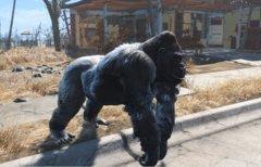 Fallout 4: Bereits 800...