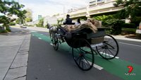 Kurios: Uber liefert 15.000 Wut-Mails per Pferdekutsche aus