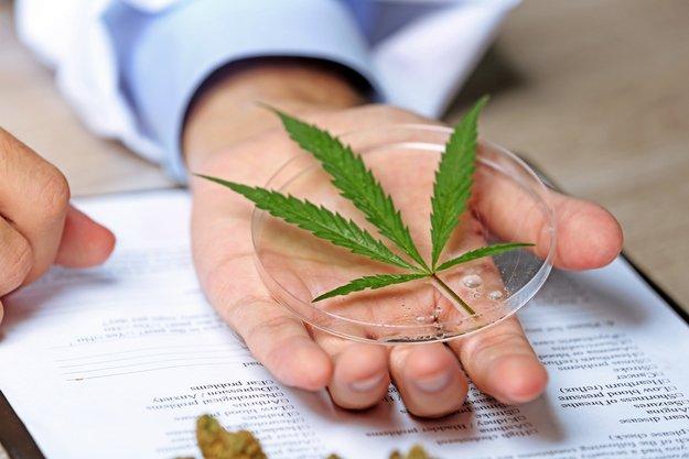 Cannabis gegen Krebs: Erkenntnisse und Vorurteile zu Cannabis als Medizin und Rick-Simpson-Öl