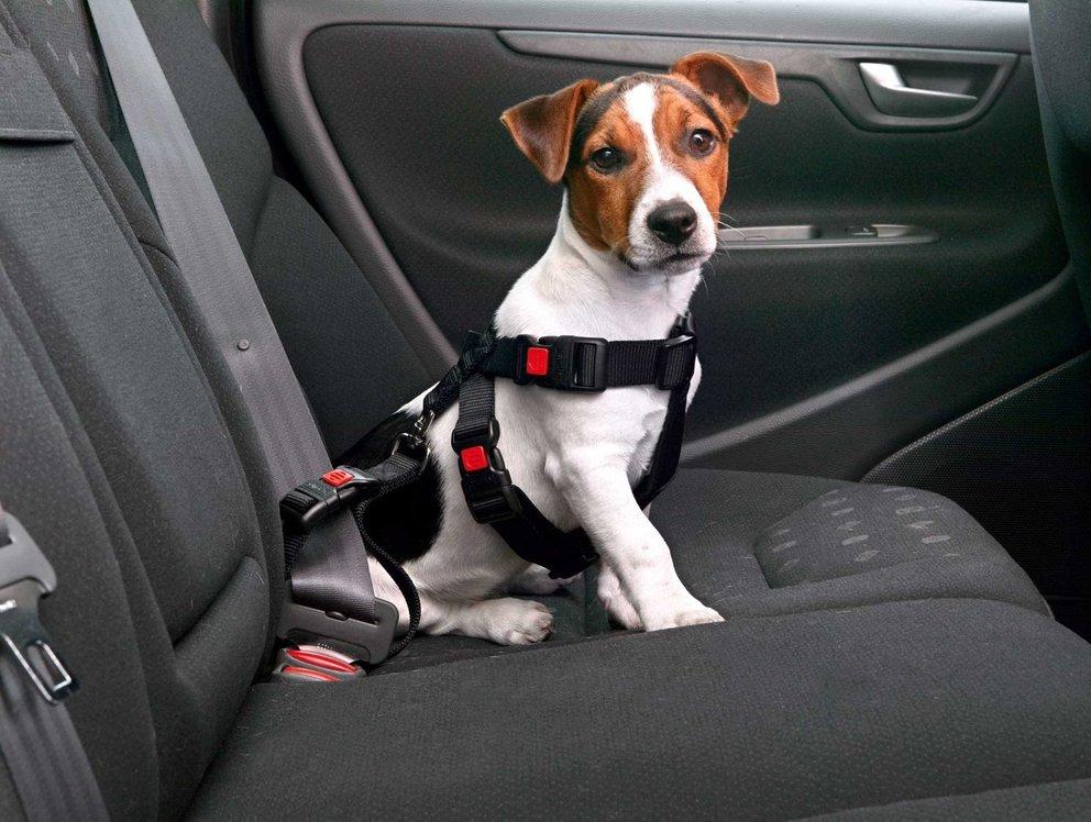 Auto-Hund-Sicherheitsgurt