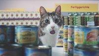 Netto-Katzen: Werbung geht viral - Netto ist auf die Katze gekommen