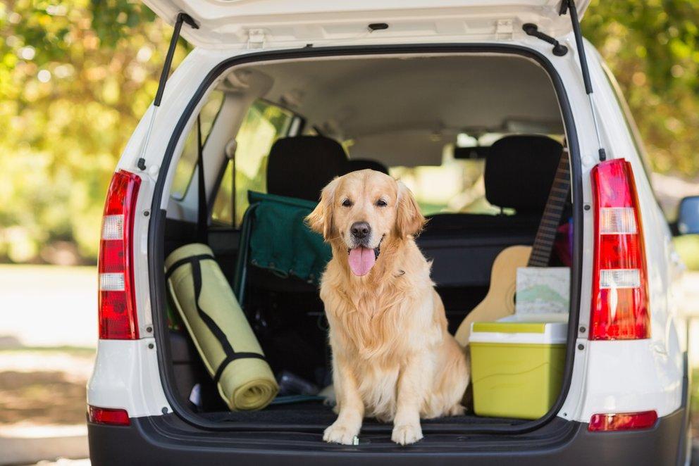 hund im auto vorschriften tipps und tricks f r das. Black Bedroom Furniture Sets. Home Design Ideas