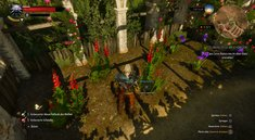 The Witcher 3: Winterkirsche, blaue Lotusblume und Basilikum aus Nazair finden