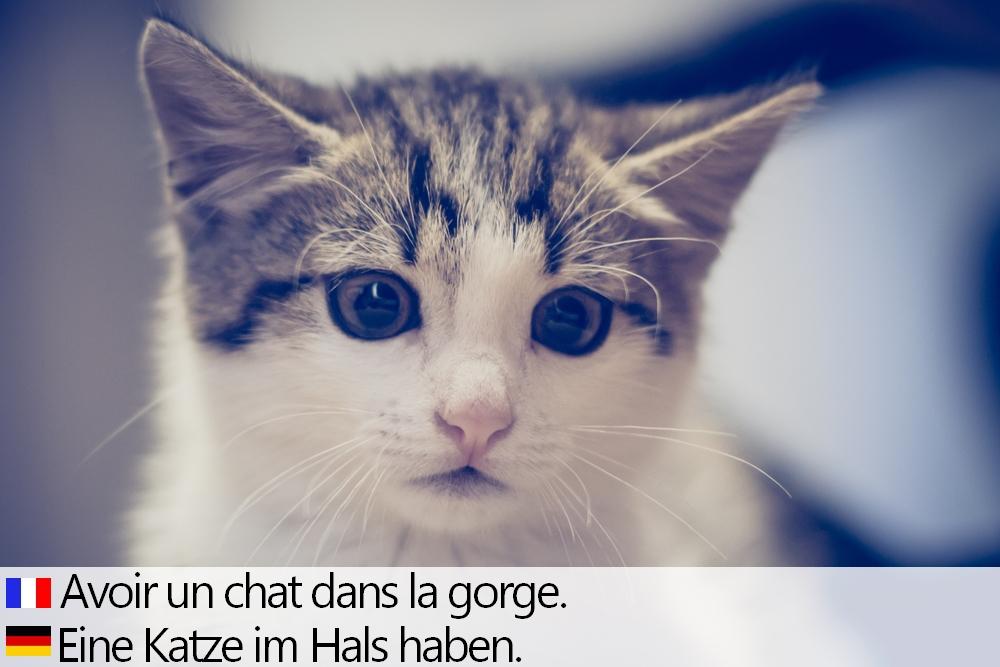 Französisch anmachsprüche Lustige Anmachsprüche