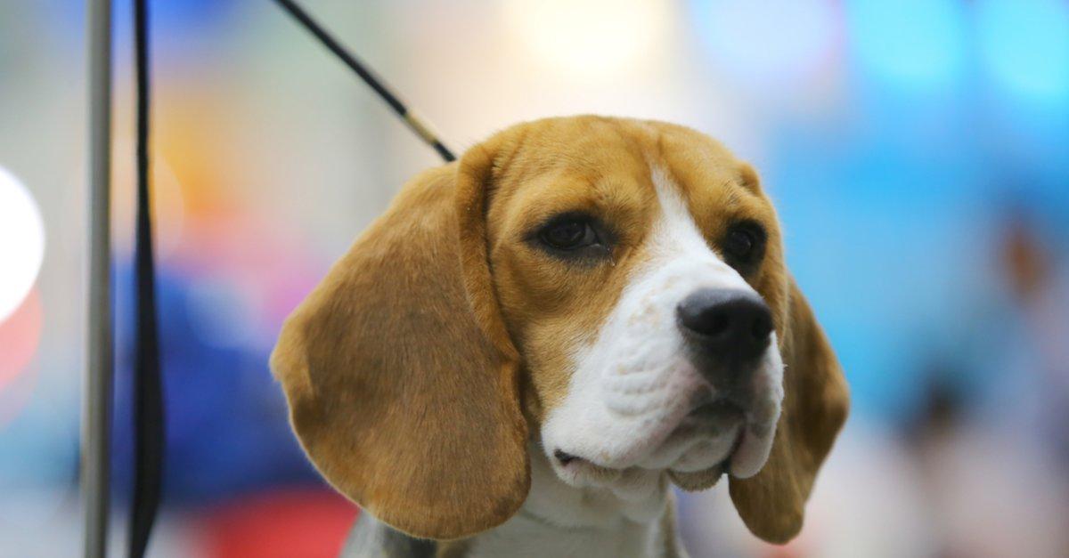 Hunde Sprüche Die Besten Sprüche über Vierbeiner Und Ihre Besitzer