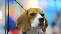Hunde-Sprüche: Die besten Sprüche über Vierbeiner und ihre Besitzer