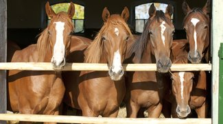 Die besten Pferdeserien für eingefleischte Pferdenarren