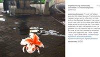 Pokémon mit Persönlichkeit: Alltagsprobleme der Monster