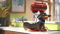 Pets im legalen Online-Stream anschauen