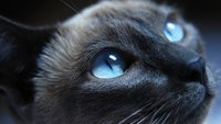 Sheba-Werbung 2016: Mit dem Song wird Katzenfutter lustig in Szene gesetzt