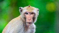 Klappe zu, Affe tot: Ursprung, Bedeutung und Synonyme der Redewendung