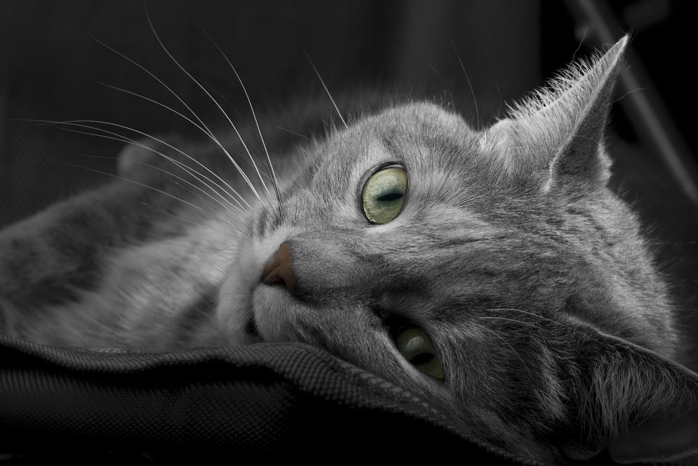 Sheba Werbung 2016 Mit Dem Song Wird Katzenfutter Lustig In Szene