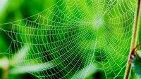 Spider-App entfernen: Reparatur am iPhone und Android-Gerät