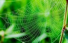 Spider-App entfernen:...