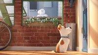Pets 2: Fortsetzung angekündigt! Alle Infos zum Sequel