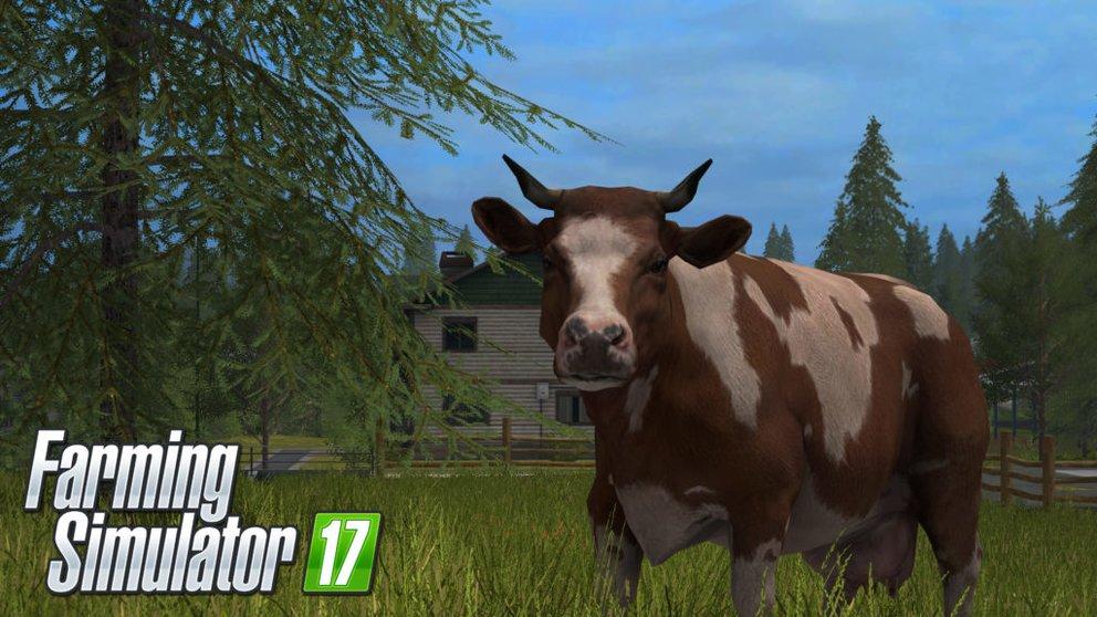 LS 17 Kühe
