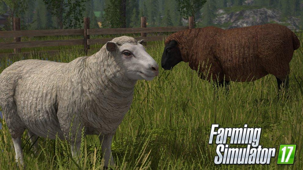 LS 17 Schafe züchten