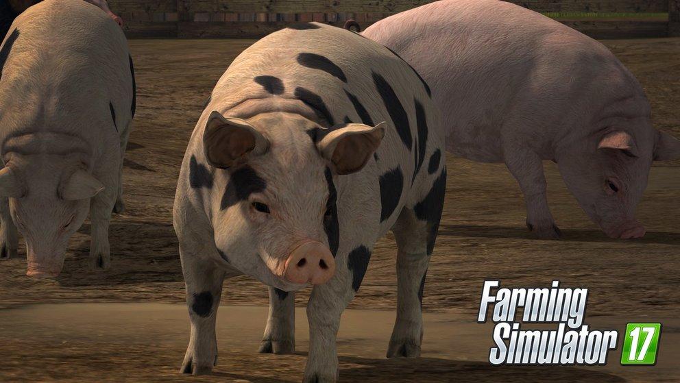 LS 17 Schweine züchten