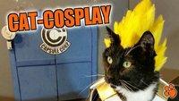 Diese Katzen sind eine ernst zu nehmende Konkurrenz für jeden Cosplayer