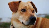 Maulkorbpflicht ab dem 1. Januar 2017 für alle Hunde: Was ist dran?