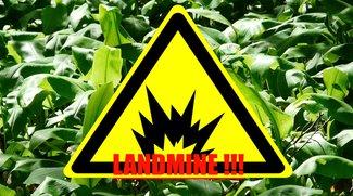 Diese Pflanze spürt Landminen auf