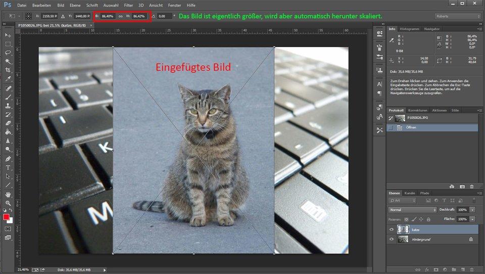 Photoshop skaliert standardmäßig eingefügte Bilder automatisch.