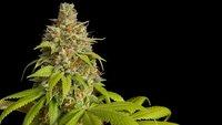 420: Bedeutung, Herkunft und Ursprung des Begriffs