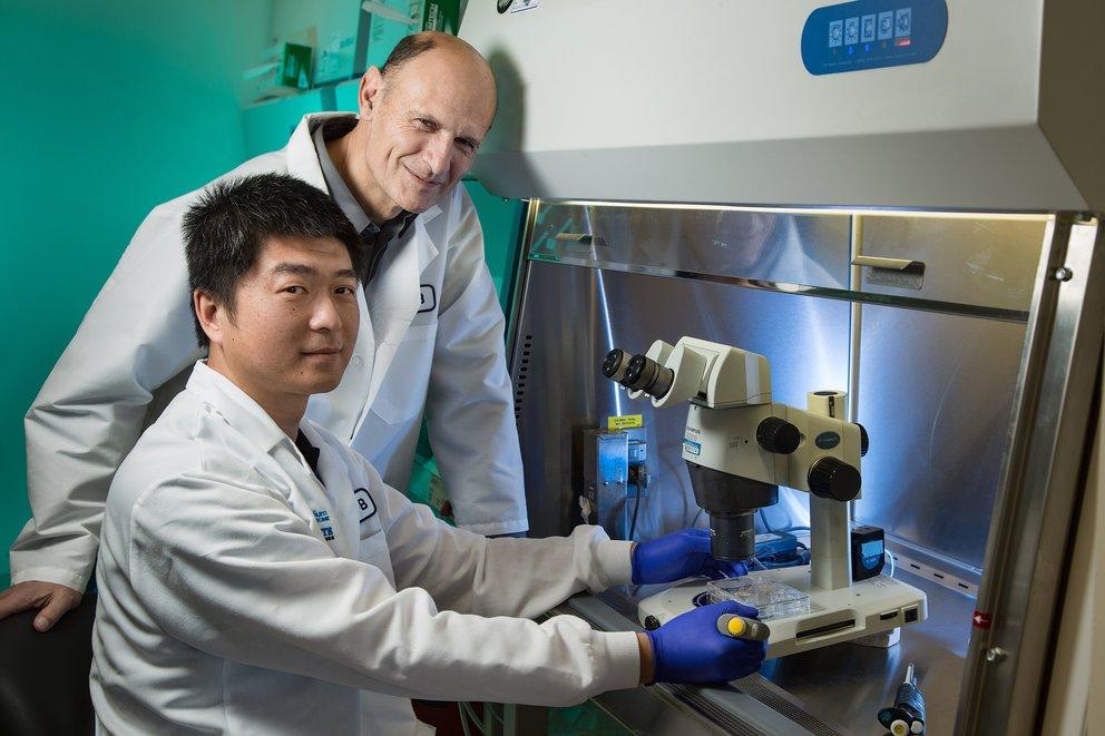 Forscher erschaffen Mischwesen aus Mensch und Schwein
