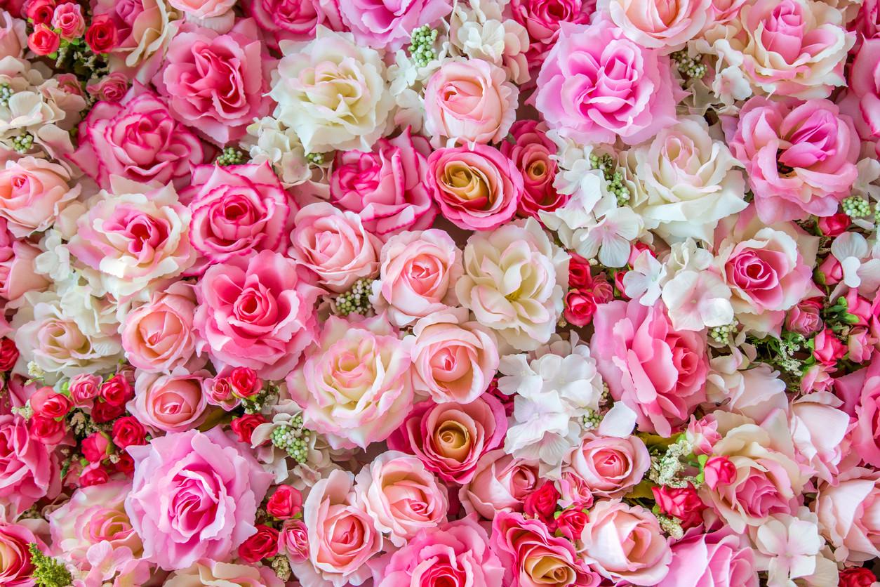 blaue rosen bedeutung blaue rosen bedeutung rote fairtrade rosen blumenstrau mit rosen und. Black Bedroom Furniture Sets. Home Design Ideas