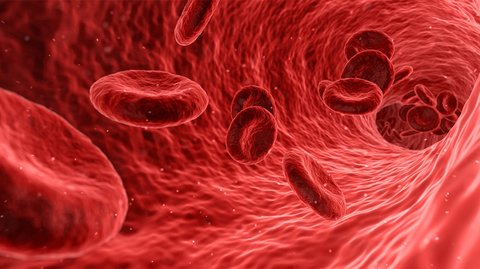 Ambrosia: Start-Up verspricht ewige Jugend durch Bluttransfusion