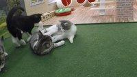 Kattarshians: Katzenbabys im Live-Stream erobern das Internet