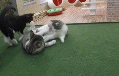 Kattarshians: Katzenbabys im...