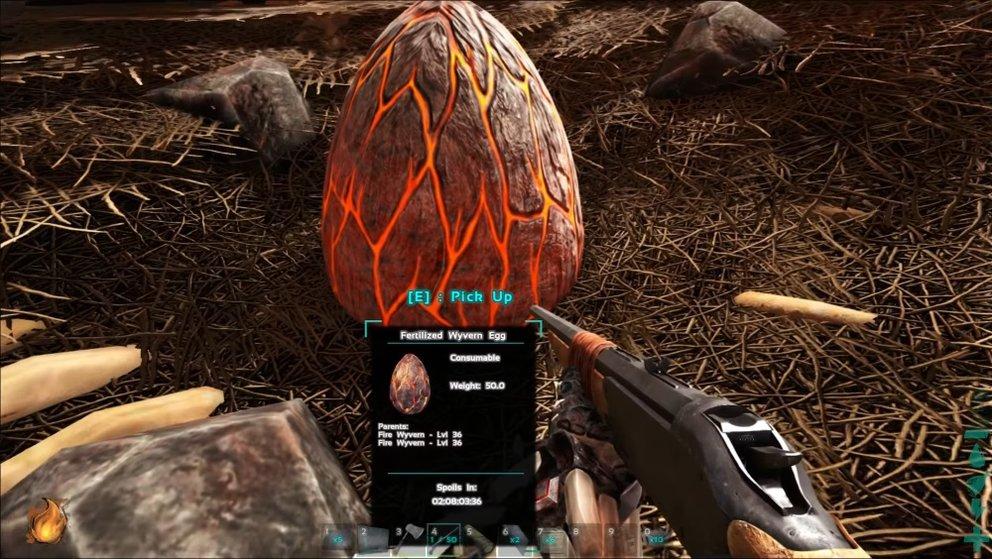 Dieses Ei zeigt euch, dass ein Feuerdrache daraus schlüpfen und vermutlich ein Level von 36 besitzen wird.