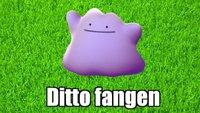 Pokémon GO: Ditto fangen - Tipps und Liste verwandelbarer Pokémon