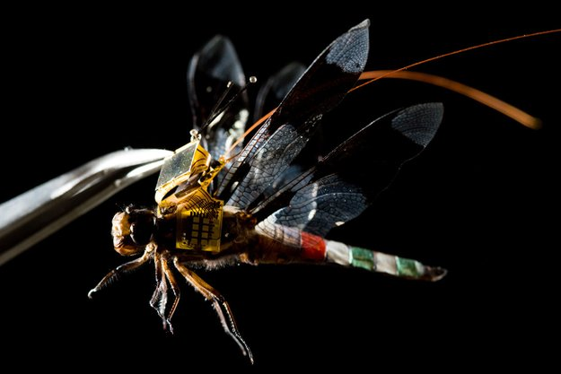 Cyborg-Libelle hebt zum ersten Mal ab