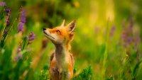 Die 6 besten Firefox-Erweiterungen – unser Tipp