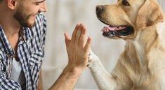 Flixbus: Sind Hunde und andere Tiere erlaubt?