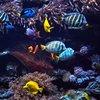 GoPro für Unterwasser: Die drei besten Modelle