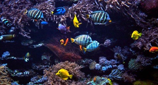 Gopro Unterwasser Artikelbild