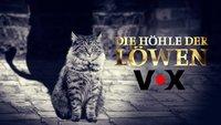 """Höhle der Löwen 2019 – die """"Flops"""":  Deals, die nach der Sendung platzten"""