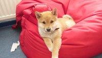 Dogecoin-Mining leicht erklärt: So geht's schnell und einfach