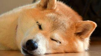 Hier könnt ihr schnell und einfach Dogecoin kaufen
