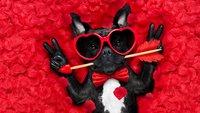Da wird Schatzi Augen machen! Die 30 +1 schrägsten Geschenke zum Valentinstag